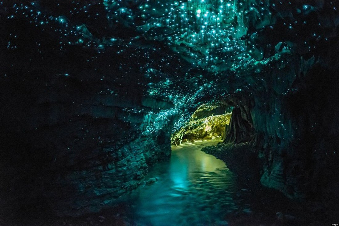 waitomo-glowworm-caves-1.jpg